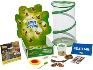 Insect Lore Deluxe Butterfly Garden Gift Set with Live Cup of Caterpillars Habitat